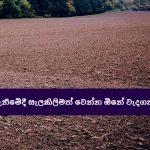ඉඩමක් ගැනීමේදී සැලකිලිමත් වෙන්න ඕනේ වැදගත් කාරණා - Things to consider when buying a land in Sri Lanka