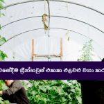 නිවසේදීම ග්රීන්හවුස් එකක එළවළු වගා කරමු! - Grow Vegetables in a Greenhouse at Home