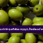 ශ්රී ලංකාවටම ආවේණික පලතුරු විශේෂයන් මෙන්න - Native Fruits to Sri Lanka